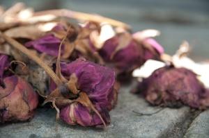 Flickr_-_Whiternoise_-_Dead_flowers,_Pére_Lachaise_Cemetery